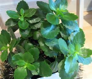 Foliage House Plant Identification - house plant identification leaves myideasbedroom com