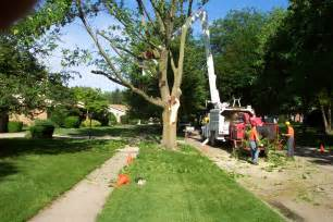 Tree Service In Tree Services Sharp Tree Service Inc Georgiasharp Tree