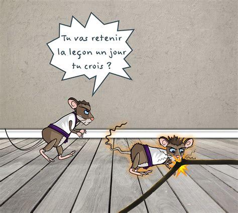 Rat Dans Le Plafond by Rats Et Souris D 233 G 226 Ts Et Dangers Stopnuisibles