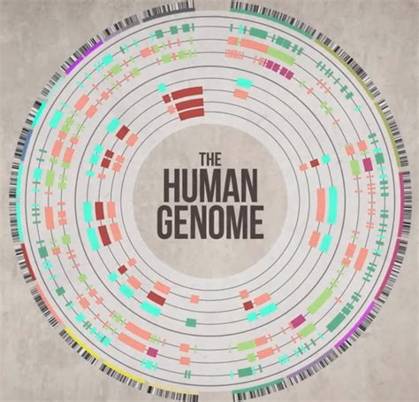 The Genome how to sequence the human genome dnaexplained genetic