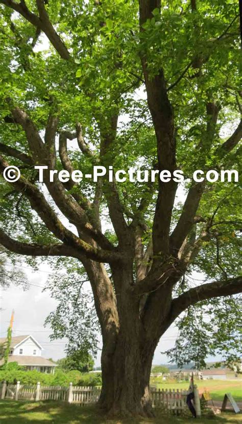 elm tree symbolism elm tree symbolism 100 elm tree symbolism moonstruck madness meaning