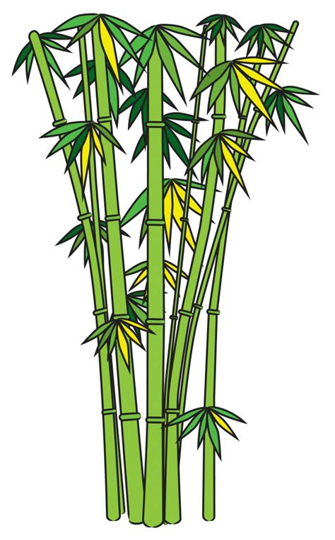 Drawing Of A Bamboo Tree how to draw a bamboo tree pencil drawing
