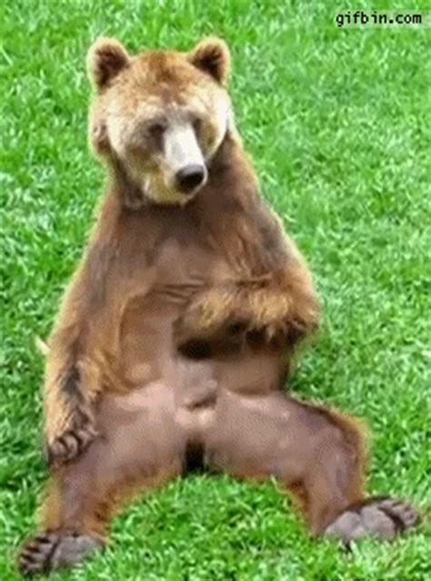 bear playing    funny gifs updated daily