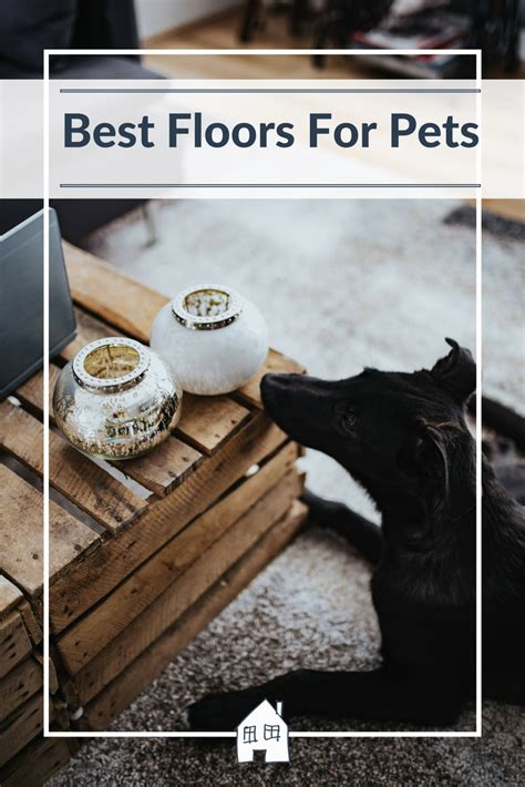 Best Flooring For Pets Best Floors For Pets Renovation Bay Bee