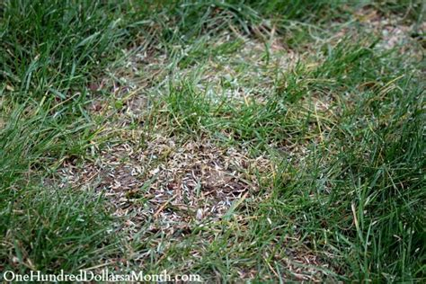 how to stop creeping charlie and friends in the lawn