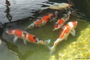 fish pond design 6 nice koi fish pond kits biological
