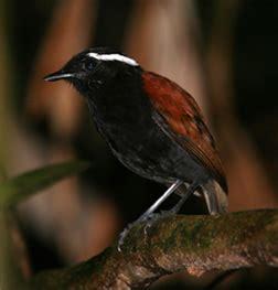 birding brazil tours | contact us
