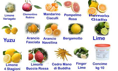 concime per limone in vaso concimi per limoni in vaso affordable concimi per limoni