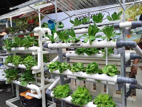 membuat kebun hidroponik di rumah cara mudah menanam hidroponik di rumah kebun bebek