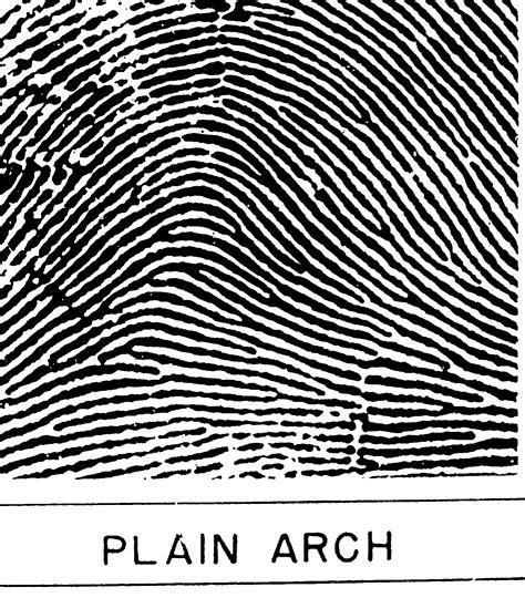 pattern types of fingerprints whorl fingerprint pattern