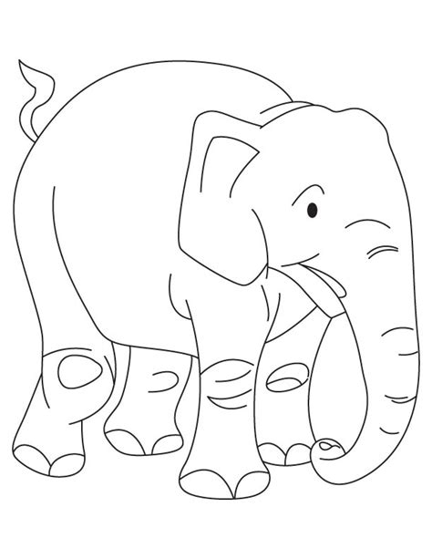 free golden calf coloring pages