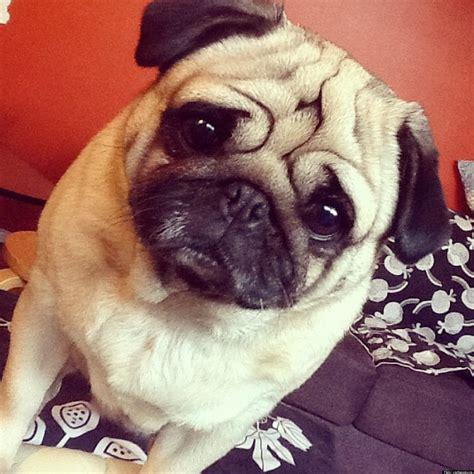 Patchwork Pet Resort - janna ardoin sues patchwork pet resort and veterinary