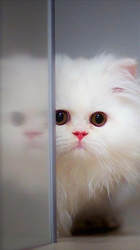 wallpaper kitten cat cute  animals