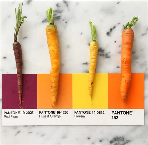 carrot colors carrot colors by lucia litman on instagram