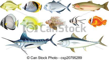 pesci clipart pesci differente sfondo bianco illustrazione vettore