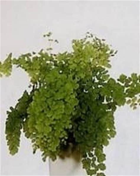 piante da bagno piante in bagno piante appartamento