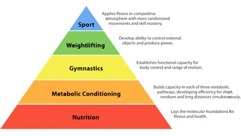 pattern diet meaning nutrition is the foundation of your crossfit training