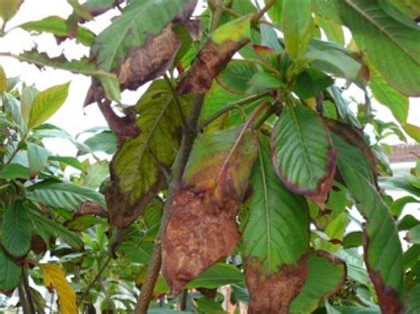 learn  types  garden plant diseases