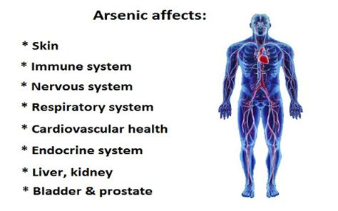 Detoxing Arsonic by What Does Arsenic Do To Us Mart Detox Clinic