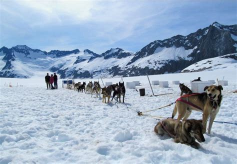 sledding alaska juneau glacier dogsled tour via helicopter alaska shore excursions