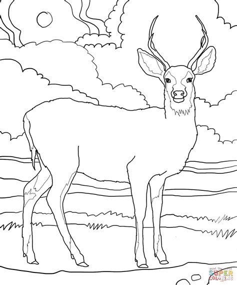 Coloring Pages Of Mule Deer | mule deer coloring page free printable coloring pages