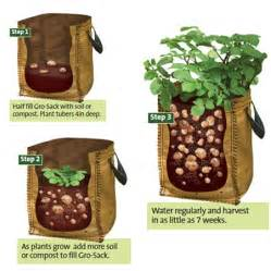how to grow potato in container urban balcony garden