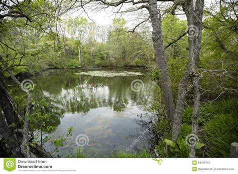 view of forest habitat royalty free stock photograph in forest and its reflection in river in day royalty