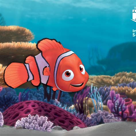 Finding On Finding Nemo Nemo Wallpaper Image For Lumia