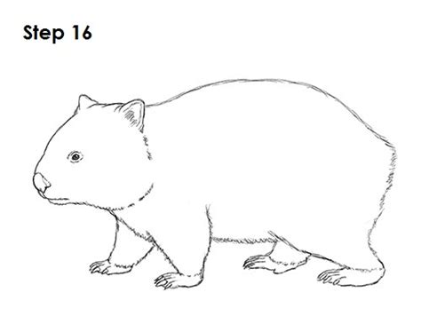 color sweet animals a grayscale coloring book books how to draw a wombat