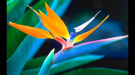 i fiori it i fiori pi 249 belli mondo