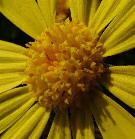 fotografie fiori fiore centrogiallo fotografia fiori