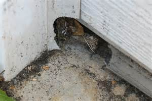 Seal Around Garage Door 8 Common Problems That Can Lead To Pest Infestations Angies List
