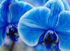 color orchid the amazing true history of orchids and what their colors