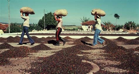 Xo Coffee Robusta gi 225 c 224 ph 234 t 226 y nguy 234 n tăng tiếp l 234 n 39 9 40 5 triệu đồng tấn