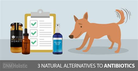 how much amoxicillin for dogs 3 antibiotics for your dogs naturally magazine