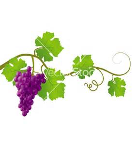 Exceptional red grape vine vector 426304 home design ideas