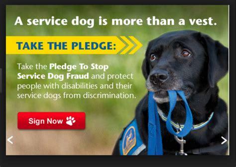 comfort pet law fake service dog impersonators under the law petslady com