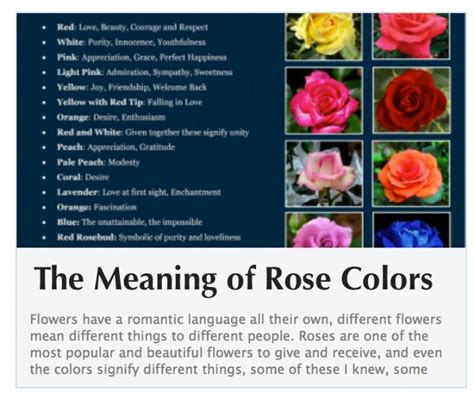 meaning of color of roses color meanings colors meanings