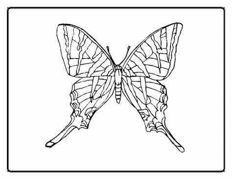 coloring book butterfly printouts butterfly patterns to color coloring home