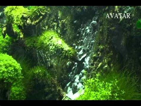 avatar landscaping aquarium youtube