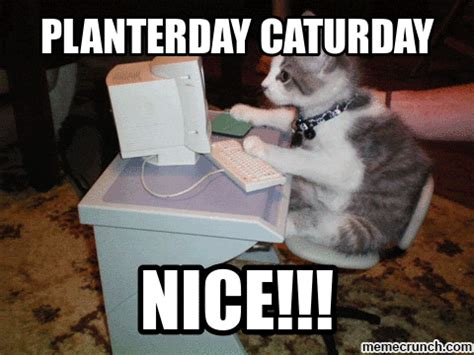 Caturday Meme - caturday meme 28 images caturday when your bored