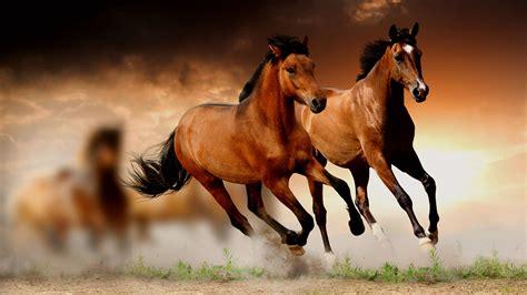 wallpaper horse free download horse wallpaper hd download