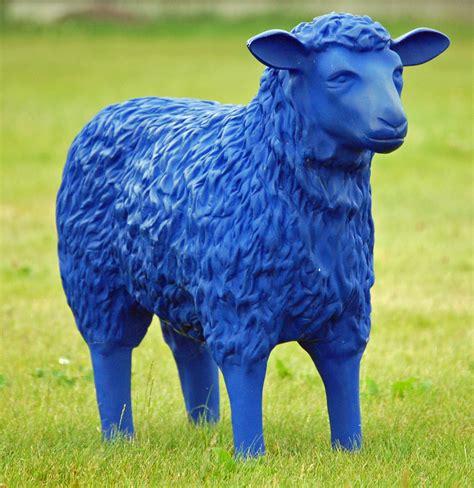 Blue Sheep file blue sheep 03 jpg