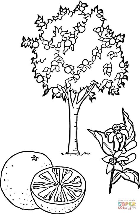 Coloriage Oranger Coloriages 224 Imprimer Gratuits O Tree Coloring Page