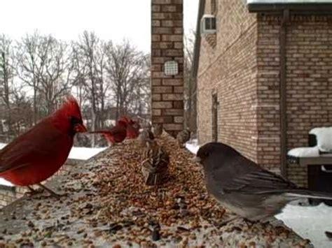 winter birds entertainment for cats vidoemo