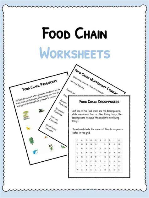 Food Chain Worksheet by Food Web Worksheet Answer Key Foodfash Co
