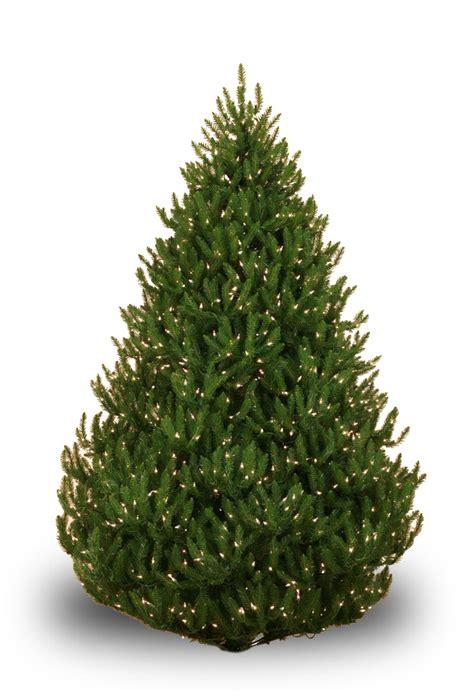 troubleshooting pre lit tree lights trees prelit 28 images balsam fir prelit tree lights
