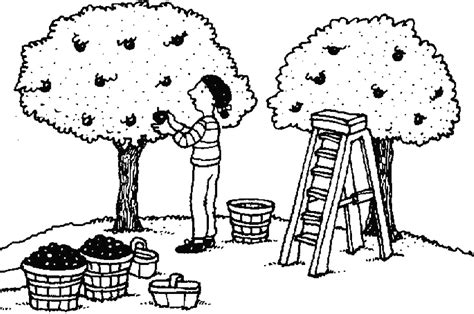 apple orchard coloring page orchard colouring pages
