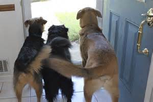 why do dogs always want food why do dogs wag their tails humans loving animals