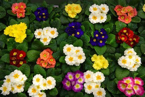 mercato dei fiori mercato floricolo sogemi spa